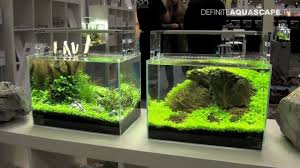 aquascaping planted aquariums of aqua design amano deutschland