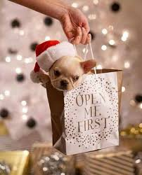 for christmas best 25 christmas puppy ideas on sleeps to christmas