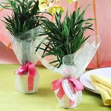 Flower Favors by Mini Palm Tree Favors Mini Palm Plant Wedding Favors