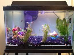Home Aquarium Fish Tank At Home Mama