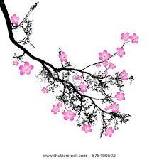 blossom japanese cherry tree isolated stock vector