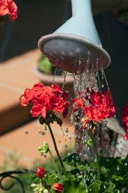watering outdoor potted plants u2013 how and when to water container