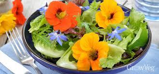 nasturtium flowers 5 edible flowers to grow in your vegetable garden