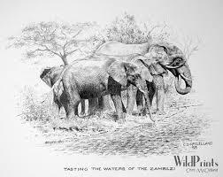 chris u0027s drawings wild prints blog