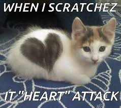Invisible Cat Memes - cat heart cute animals pinterest cat funny cat memes and
