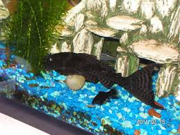 252 best s new pet light betta fish ideas images on