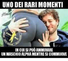 Alpha Meme - uno dei rari momenti in cui si puo ammirare un maschio alpha mentre