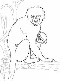 cute jungle animal monkey coloring pages womanmate com