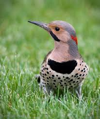 Pennsylvania birds images 23 best birds of western pa images bird pictures jpg