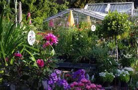 Pflanzen Fur Japanischen Garten Pflanzen U2014 Königliche Gartenakademie