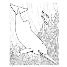 20 free printable dolphin coloring pages
