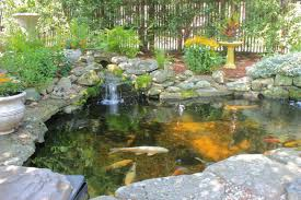 backyard backyard koi ponds and water gardens are growing trend