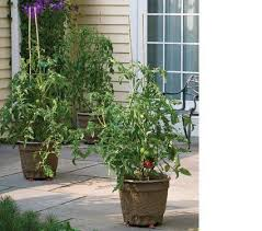 Types Of Patio Tomatoes Best 25 Patio Tomatoes Ideas On Pinterest Diy Planters Planter