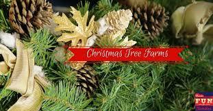 christmas tree farms nashville fun for families