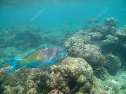 marine life in indian ocean u2014 stock photo babetka 40690375