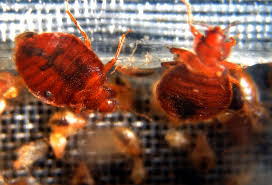 I Found A Bed Bug Now What Bed Bugs On A Plane Airline Sorry After Family Is Covered In
