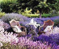 beautiful spring planting lavender for a beautiful spring garden