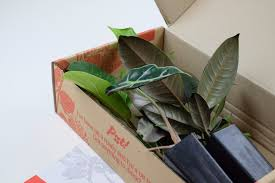 Buy House Plants Indoor Plants Buy House Plants Online Gift Ideas U2013 Plants In A Box