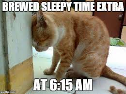 Monday Cat Meme - monday morning cat imgflip
