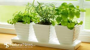container vegetable garden 3 best food grade container choices