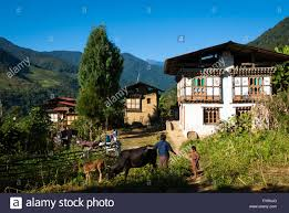 Farm Houses Woman And Child With Cattle In Front Of Traditional Farm Houses In