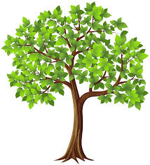 tree png transparent clip image gallery yopriceville high