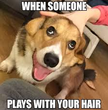 Dog Funny Meme - funny dog meme dump album on imgur