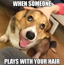 Meme Dog - funny dog meme dump album on imgur