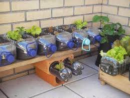 Bottle Garden Ideas Plastic Bottle Garden Idea Pictures Photos And Images For