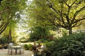 Tree Ideas For Backyard 32 Brilliant Backyard Tree Ideas