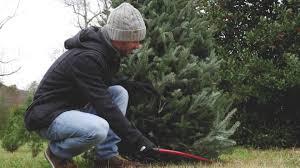 buy christmas tree which christmas tree should you buy cnn