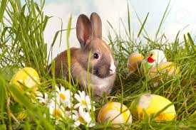 colorful easter eggs in grass with a baby rabbit stock photo