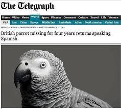 Funny Bird Memes - i can has cheezburger birds funny animals online cheezburger