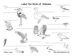 Alabama birds images Alabama habitats mammals birds amphibians reptiles jpg