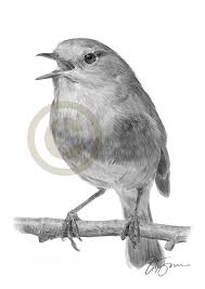 robin redbreast bird pencil drawing art print a4 only signed