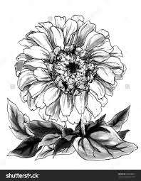 zinnia flower drawing zinnia flowers coloring page free
