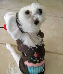 Small Dog Halloween Costumes Ideas 215 Ridiculous Dog Costumes Images Animals