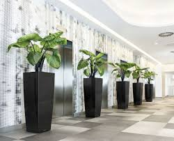 office design cool great office plants inspiration of best