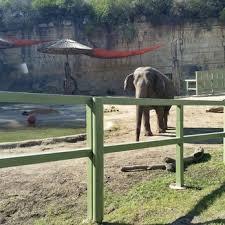 san antonio zoo lights coupon san antonio zoo 1056 photos 324 reviews zoos 3903 n st