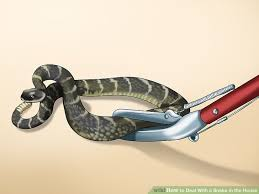 Found A Snake In My Backyard How To Deal With A Snake In The House 14 Steps With Pictures