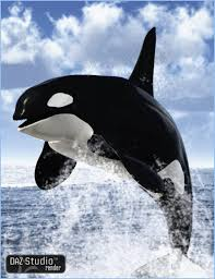 orca killer whale 3d models and 3d software by daz 3d