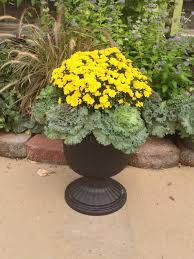 98 best ornamental cabbage planter images on fall