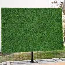 download balcony plants for privacy solidaria garden