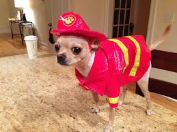 Chihuahua Halloween Costumes 52 Pet Stuff Images Animals Funny Dogs