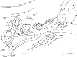 fallen tree over a stream coloring page