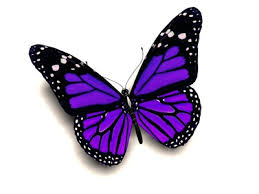 purple butter fly images 3d purple butterfly butterflies