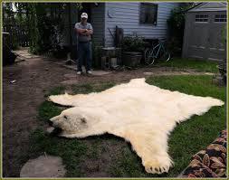 Bison Hide Rug Real Bear Rugs Roselawnlutheran