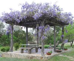 Trellis For Wisteria 523 Best Wisteria Images On Pinterest Flowers Windows And Wisteria