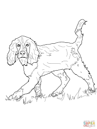 english springer spaniel coloring page free printable coloring pages