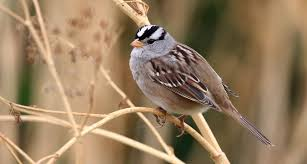 seeds coated in a common pesticide might affect birds migration